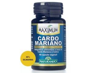 MAXIMUM CARDO MARIANO 40 Cps