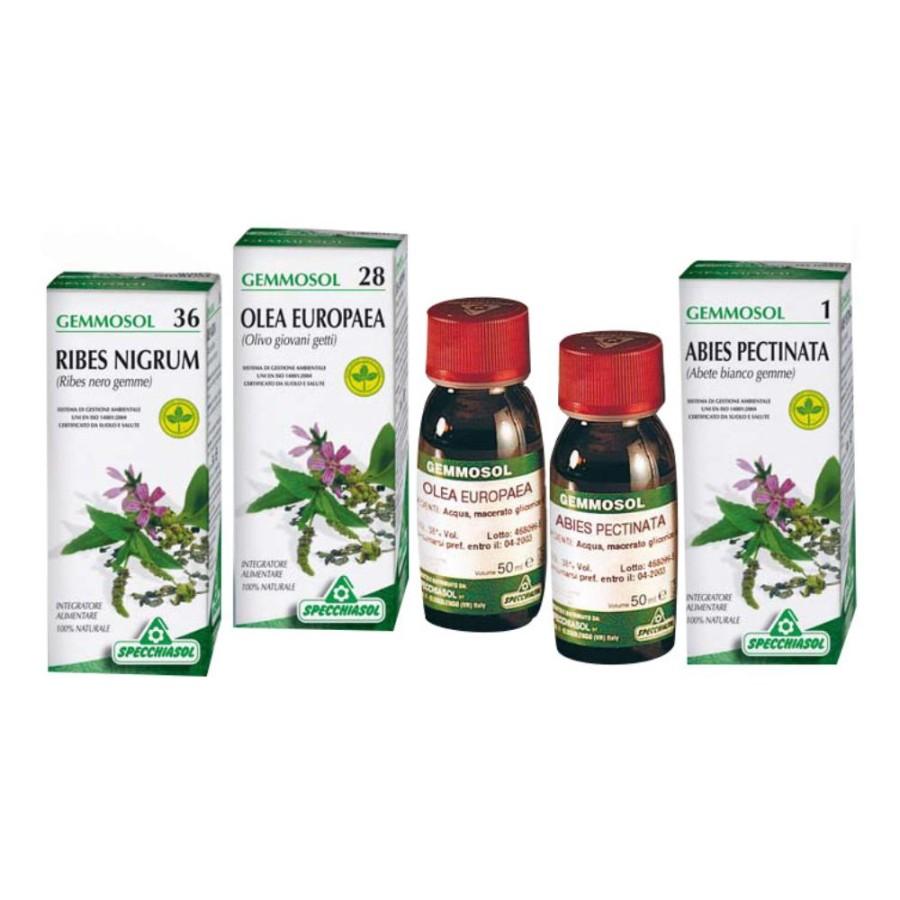 Specchiasol Gemmosol 36 Ribes Nero 50 ml
